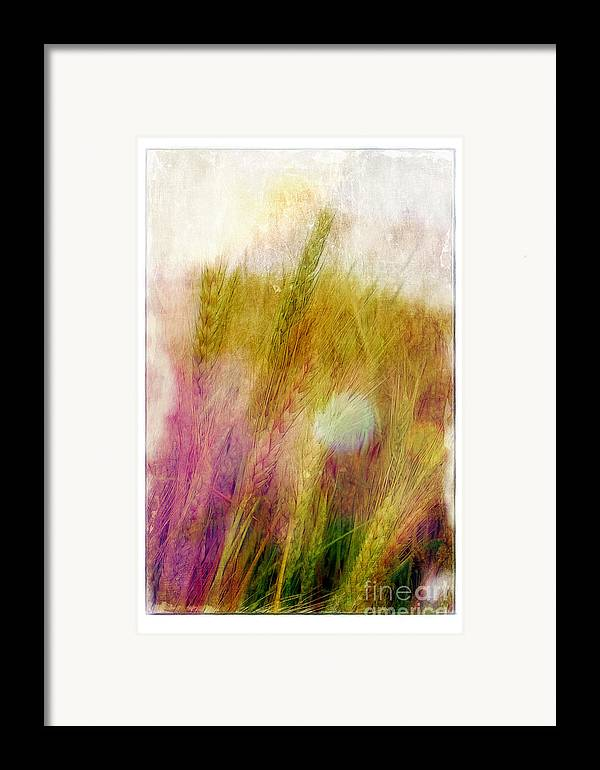 Field Framed Print featuring the photograph Another Field Of Dreams by Judi Bagwell