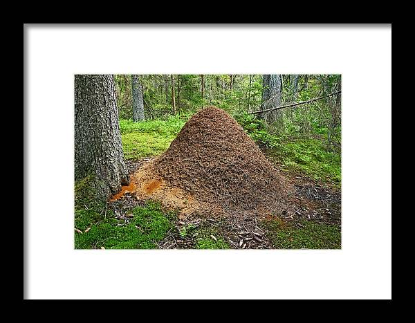Ant Framed Print featuring the photograph Ant Hill by Bjorn Svensson