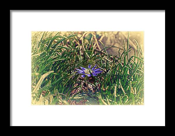 Blue Flower Framed Print featuring the photograph Antiquated Flower by Alex AG