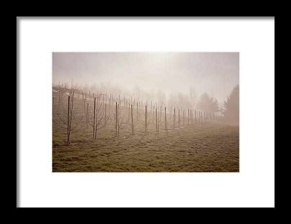 Apple Tree Nursery Framed Print featuring the photograph Apple Tree Nursery by Tom Singleton