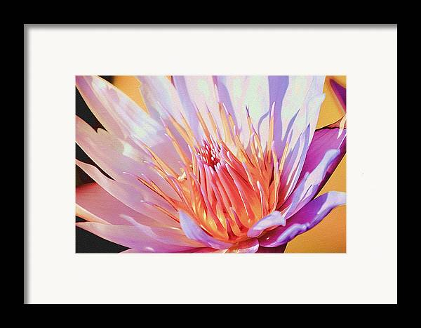 Water Lily Framed Print featuring the photograph Aquatic Bloom by Julie Palencia