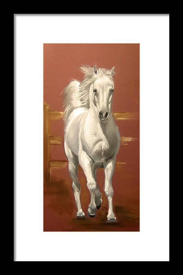 Realism Framed Print featuring the pastel Arab Stallion by Margaret Alder