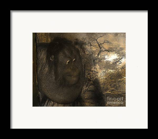 Arne J Hansen Framed Print featuring the photograph Arboreal Dreams by Arne Hansen