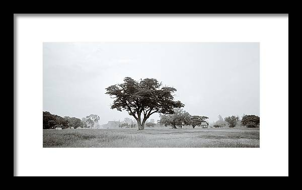 Tree Framed Print featuring the photograph Garden Of Eden by Shaun Higson