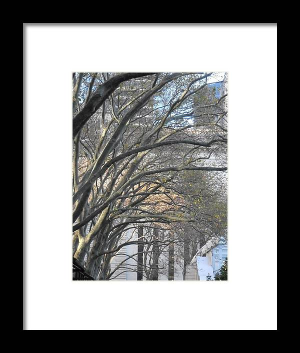 Trees Framed Print featuring the photograph Arched Trees by Kimberly Perry