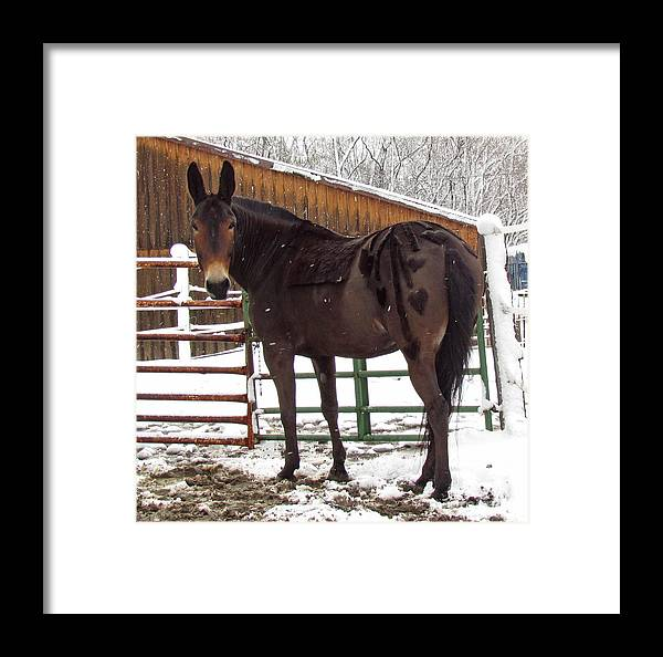 Mule Framed Print featuring the photograph Are We Done Yet by Deborah Johnson