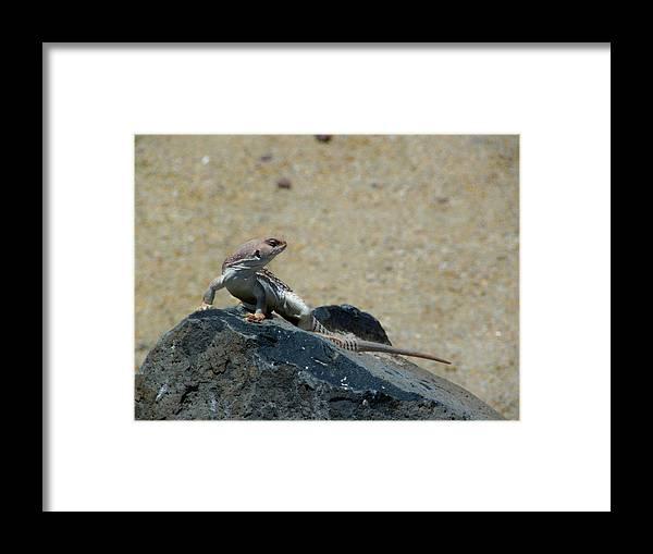 Arizona Framed Print featuring the photograph Arizona Wildlife by Wayne Toutaint
