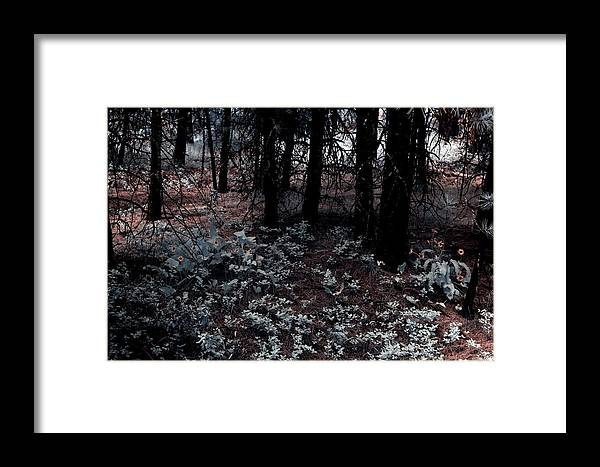 Arrowleaf Framed Print featuring the photograph Arrowleaf Balsamroot by One Rude Dawg Orcutt