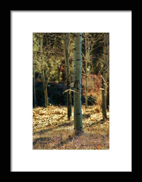 Wildlife Framed Print featuring the photograph Aspen In Montana by William Kelvie