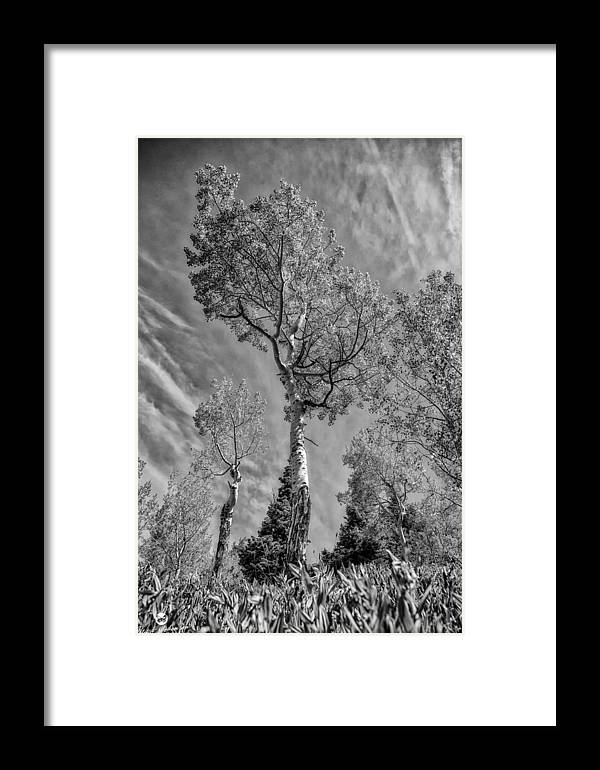 Black N White Framed Print featuring the photograph Aspen In The Sky Bw by Mitch Johanson