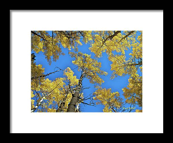 Aspen Framed Print featuring the photograph Aspen In The Sky by Stephen Johnson