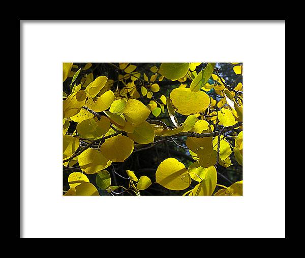 Yellow Framed Print featuring the photograph Aspen Leaves 1 by Tony and Kristi Middleton