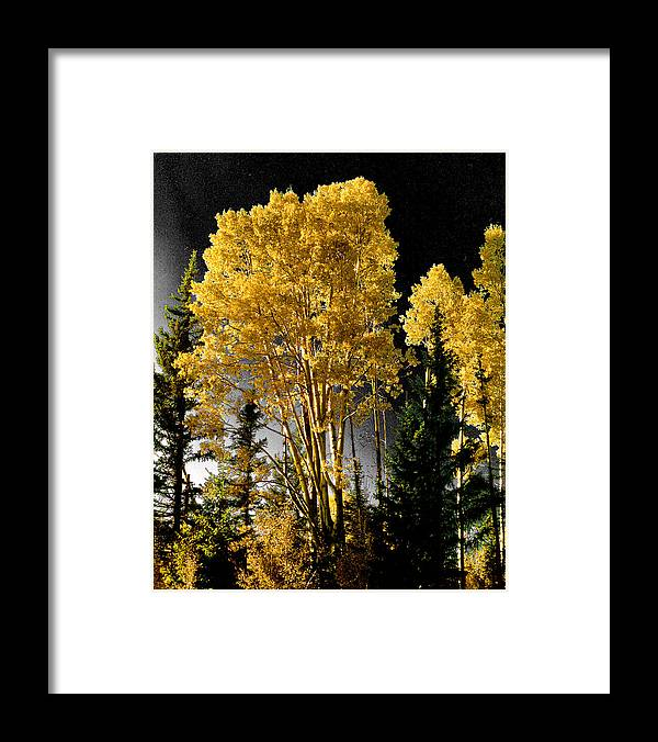Aspens Framed Print featuring the photograph Aspens 2 by Jim Painter