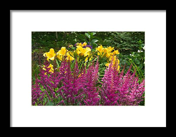Astilbe Framed Print featuring the photograph Astilbe And Lilies by Douglas Barnett