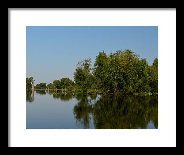 bald Cypress Framed Print featuring the photograph Atchafalaya Basin 17 by Maggy Marsh