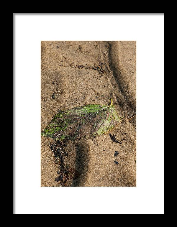 Leaf Framed Print featuring the photograph Atres 2 by Karol Livote