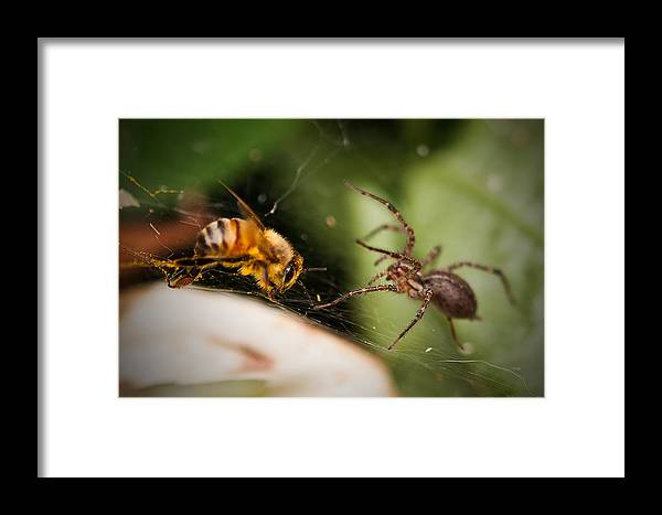 Honeybee Framed Print featuring the photograph Attack And Defend by Kelvin Andow