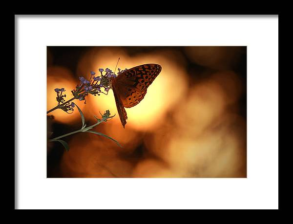 Butterfly Framed Print featuring the photograph August Evening by Kathryn Mayhue