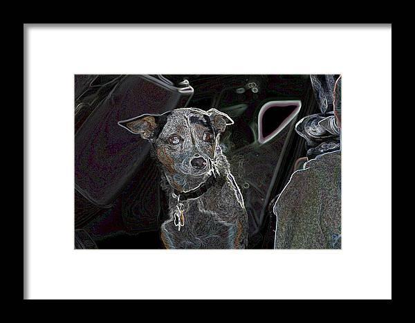 Australian Cattle Dog Framed Print featuring the photograph Australian Cattle Dog Sheltie Mix by One Rude Dawg Orcutt