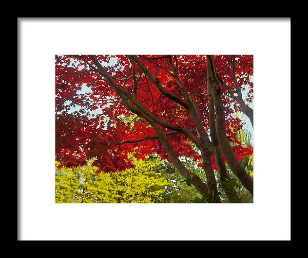 Fall Framed Print featuring the photograph Autumn Beauty by Barbara White