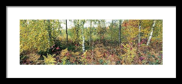 Nature Framed Print featuring the photograph Autumn Birchh Forest by Ulrich Kunst And Bettina Scheidulin