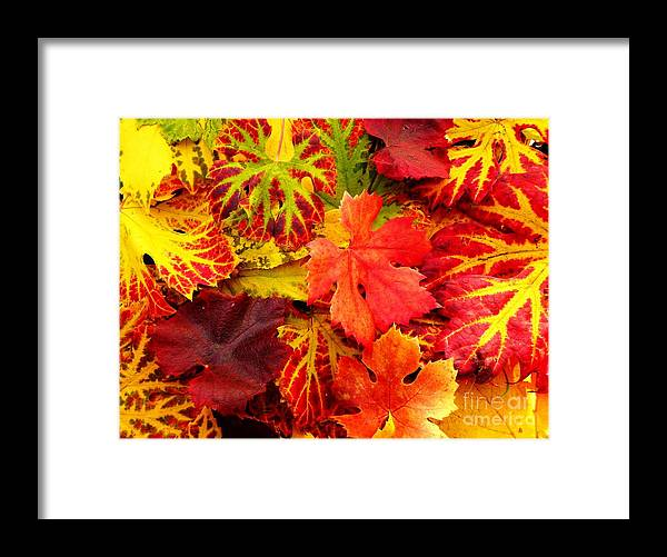 Autumn Framed Print featuring the photograph Autumn Carpet by Amalia Suruceanu
