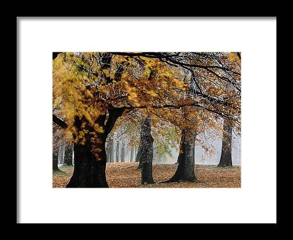 Europe Framed Print featuring the photograph Autumn Foliage by Mattias Klum