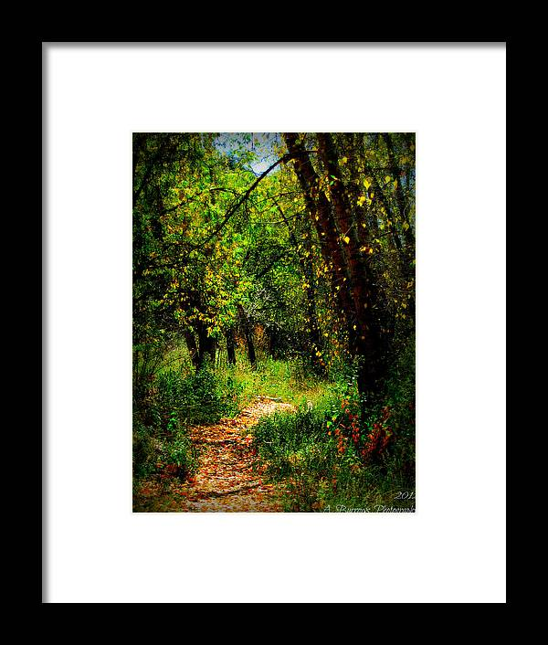 Prescott National Forest Framed Print featuring the photograph Autumn Hike by Aaron Burrows