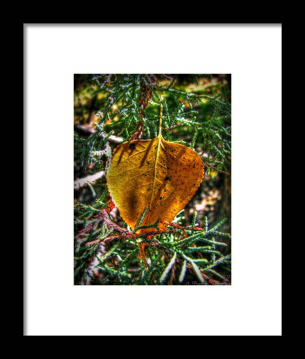 Bradshaw Mountains Framed Print featuring the photograph Autumn Leaf And Juniper Needles by Aaron Burrows