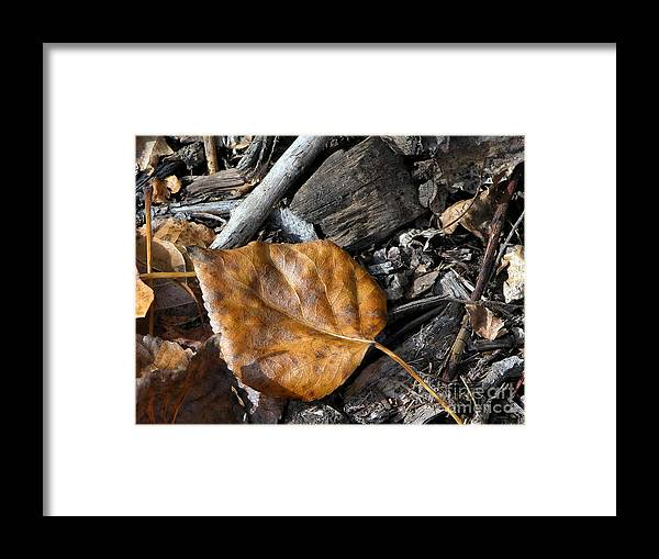 Autumn Framed Print featuring the photograph Autumn Leaf by Brian Ewing