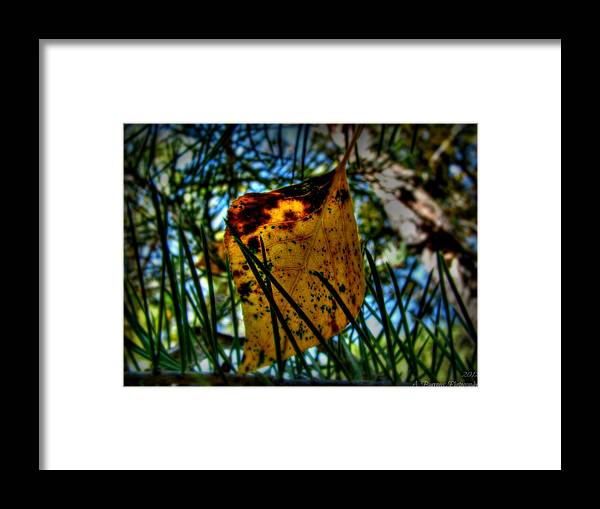 Bradshaw Mountains Framed Print featuring the photograph Autumn Leaf In The Pine Needles by Aaron Burrows