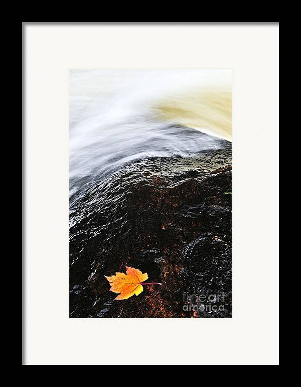 River Framed Print featuring the photograph Autumn Leaf On River Rock by Elena Elisseeva