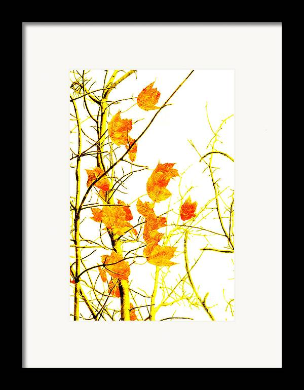 Abstract Framed Print featuring the photograph Autumn Leaves Abstract by Andee Design