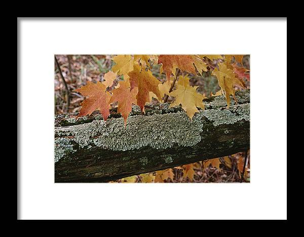 Outdoors Framed Print featuring the photograph Autumn Leaves And A Lichen-covered Log by Stephen Sharnoff