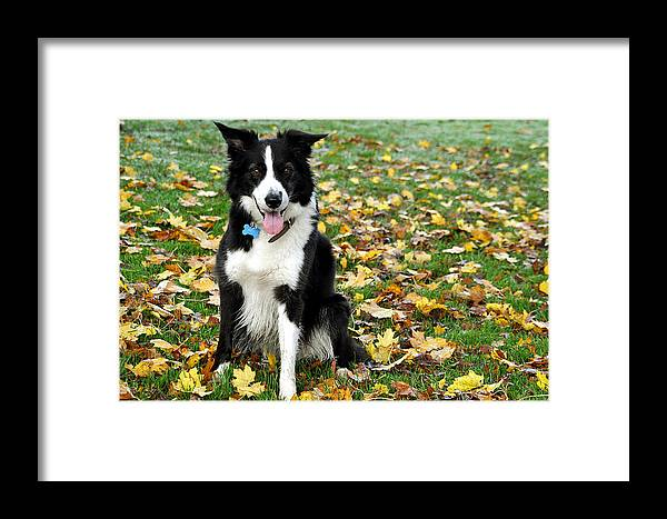 Autumn Framed Print featuring the photograph Autumn Leaves by Kevin Askew
