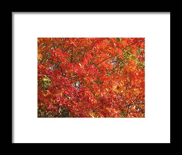 Autumn Leaves Framed Print featuring the photograph Autumn Leaves by Shawn Hughes