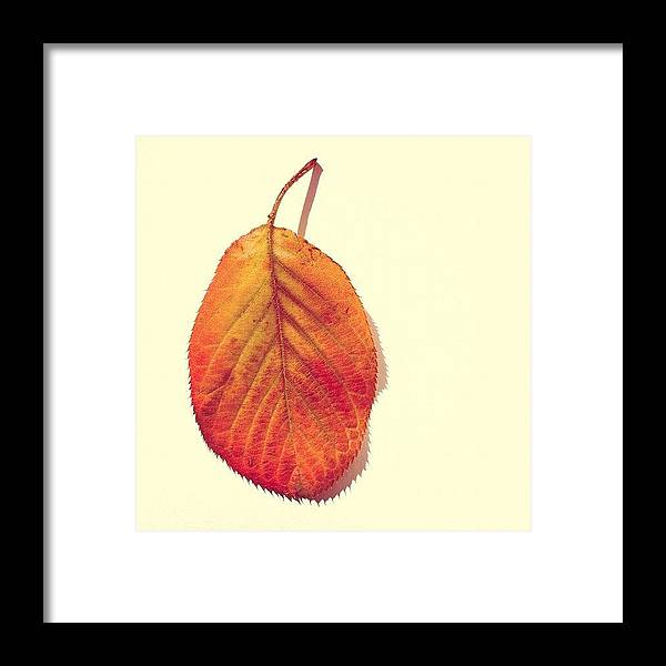 Autumn Framed Print featuring the photograph Autumn by Nic Squirrell