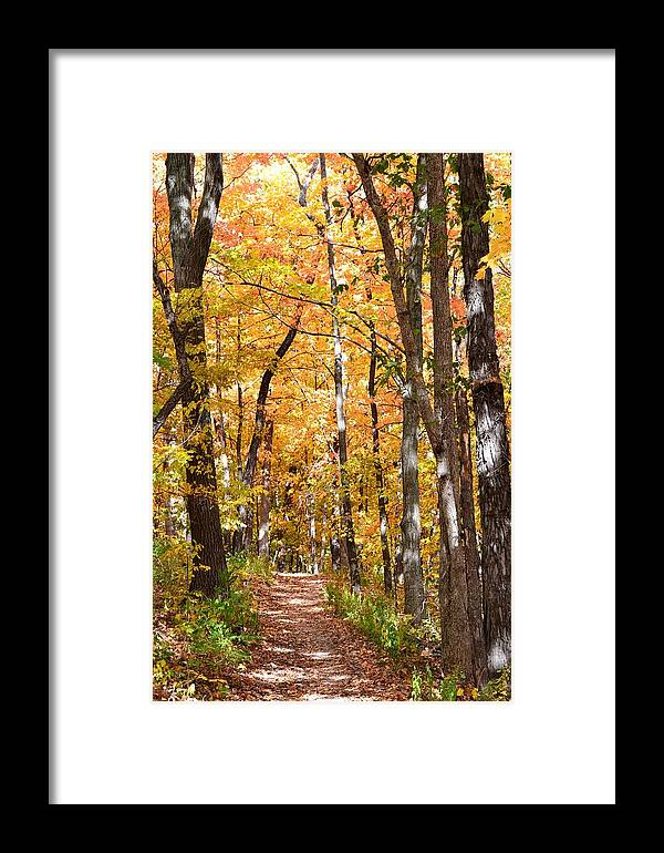 Fall Framed Print featuring the photograph Autumn Path 2 by Kim Hymes