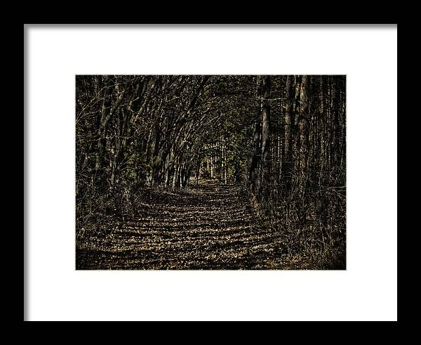 Trail Framed Print featuring the photograph Autumn Path by Thomas Young