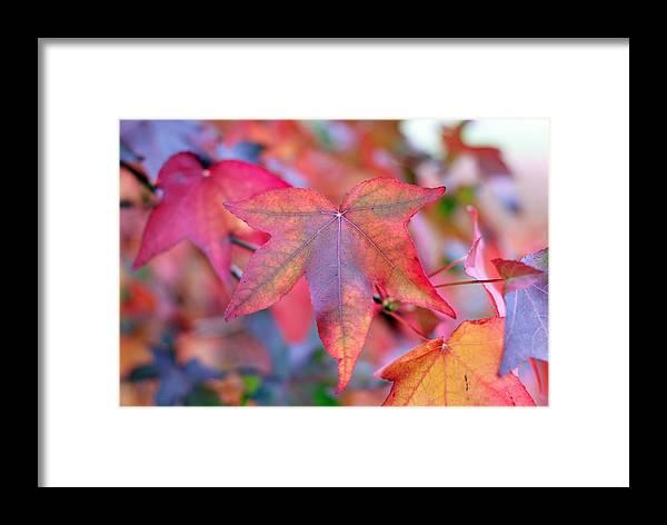 Leaf Framed Print featuring the photograph Autumn Rainbow by Barbara Domanska