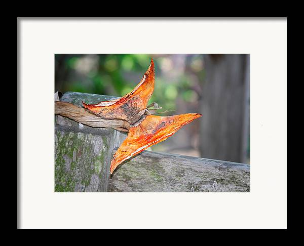 Autumn Framed Print featuring the photograph Autumn - The Year's Loveliest Smile by Christine Till