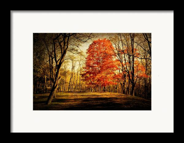 Fall Framed Print featuring the photograph Autumn Trail by Kathy Jennings