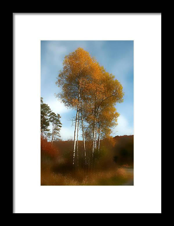 Trees Framed Print featuring the photograph Autumn Trees by Jim Painter