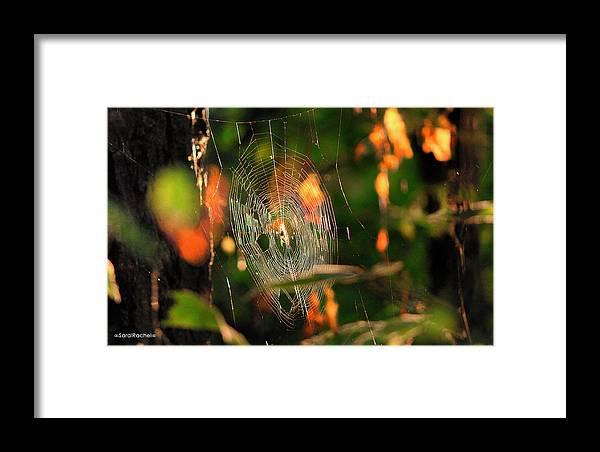 Autumn Framed Print featuring the photograph Autumn Web by Sarai Rachel