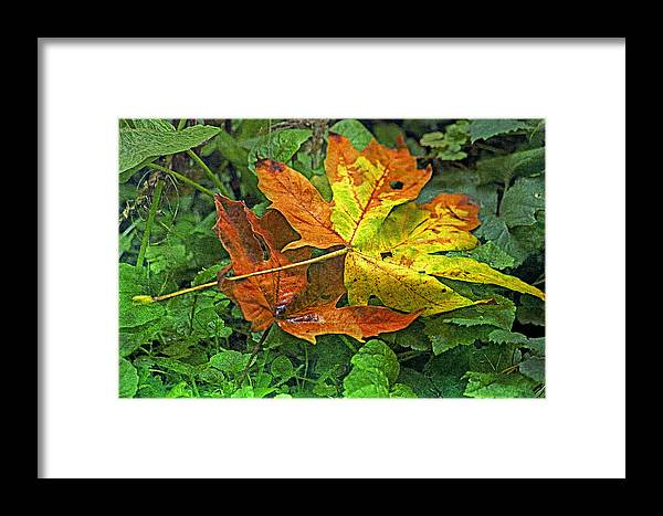 Autumn Framed Print featuring the photograph Autumn's Gift by Bonnie Bruno