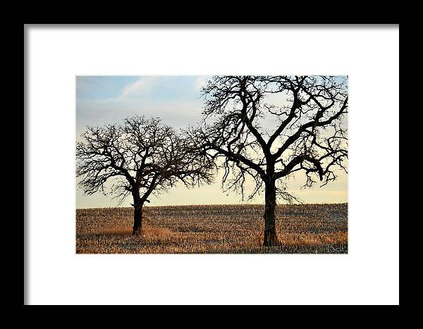 Tree Framed Print featuring the photograph Awaiting Winter by Christine Belt