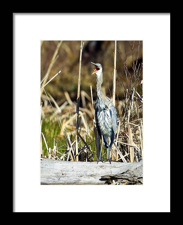 Lee Metcalf Wildlife Refuge Framed Print featuring the photograph Awk by Merle Ann Loman