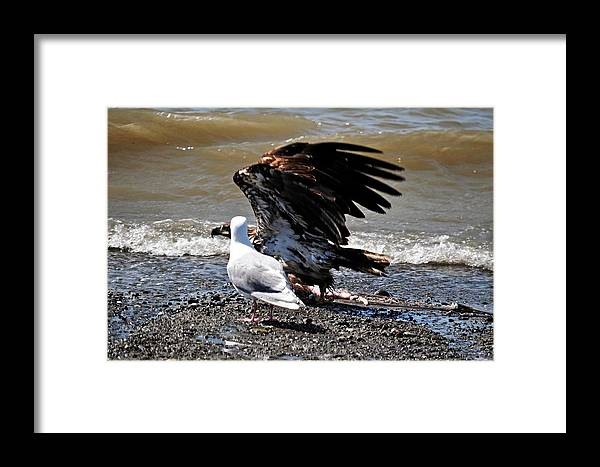 Bald Eagle Framed Print featuring the photograph Baby Bald Eagle Movement by Debra Miller