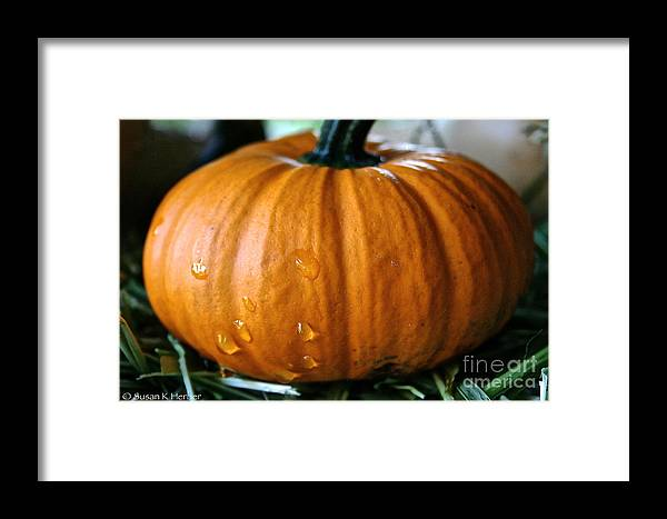 Outdoors Framed Print featuring the photograph Baby Pumpkin Tears by Susan Herber