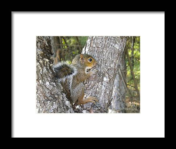 Animal Framed Print featuring the photograph Baby Squirrel by Tessa Priddy